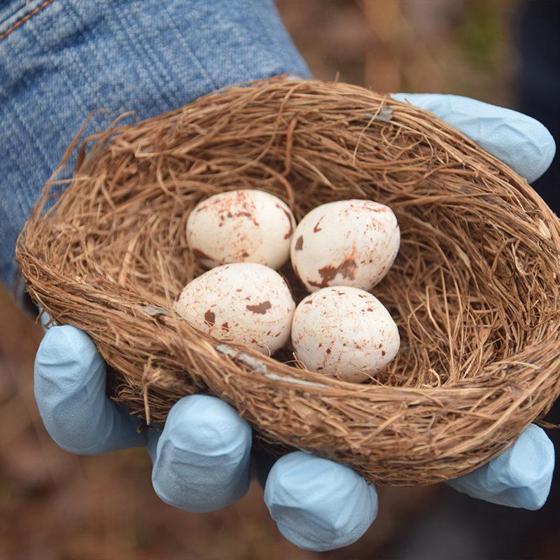 Clarke biology student handling eggs