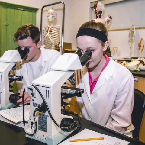 Biology Major Students Engaged in Hands On learning