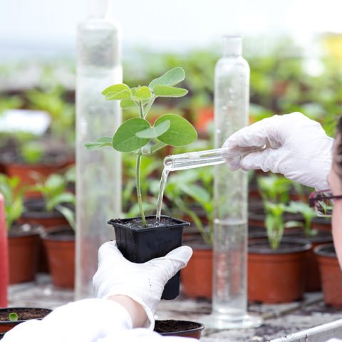 Environmental science degree students at Clarke University conducting tests.